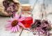 Echinacea antinfluenzale naturale
