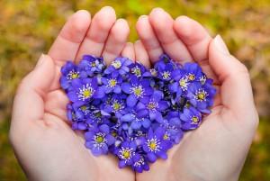 essenza di violetta